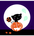 cat and pumpkin vector image vector image