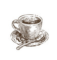 cup coffee sketch vintage vector image