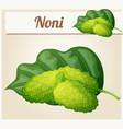 noni fruit cartoon icon vector image