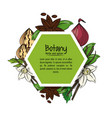 Botany herbs and spices