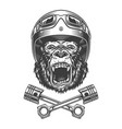 ferocious gorilla head in motorcycle helmet vector image vector image