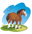 funny cartoon horse vector image