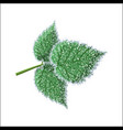 morning frost deposition soft rime on raspberry vector image vector image