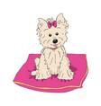 cairn terrier dog breed vintage vector image