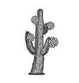 blooming cactus line art sketch vector image vector image