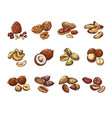cartoon nuts and seeds hazelnut and coconut vector image vector image