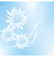 chamomile blue 3 vector image vector image