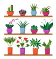 plants in pots on the shelves vector image vector image
