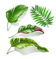 tropical leaves realistic monstera palm set vector image