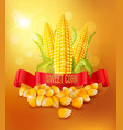 background with grains and cobs of corn