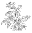 graphic ornate flowers vector image