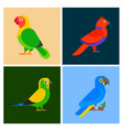 parrots birds breed species animal flayer brochure vector image vector image