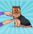 pop artbrushing teeth yorkshire terrier vector image