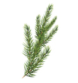 Spruce branches Christmas tree branch vector image vector image