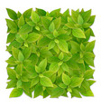 square shape from green leaves vector image vector image