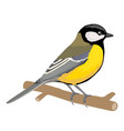 tit bird sits on a branch isolated object on a vector image vector image