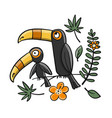 toucans paradise tropical bird for your design vector image vector image
