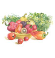 watercolor vegetables in bowl and herbs isolated vector image vector image