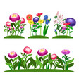 garden flowers composition peony lilly vector image