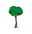 green tree with rounded crown vector image