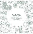 herbal tea banner template cafe restaurant menu vector image vector image