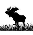 Moos in the Meadow vector image vector image