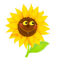 sunflower character isolated vector image