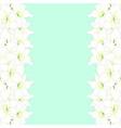 white amaryllis border - hippeastrum christmas vector image vector image