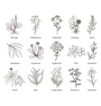 Medicinal herbs and plants doodle vector image