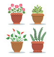 indoor plants leafy and with blossom in clay pots vector image