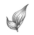 rhapis robusta tropical leaf hand drawn vector image vector image