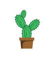 cactus plant vector image vector image