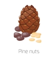 Pile of nuts Pine vector image