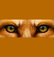 red fox fox eyes close-up vector image vector image
