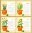 chives and rosemary collection vector image vector image