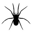 spider isolated vector image