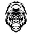 head mascot gorilla isolated on white vector image