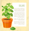 oregano plant and powder text vector image vector image