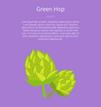 green humulus hop isolated vector image vector image