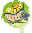 Grilled vegetables on a lettuce leaf vector image vector image