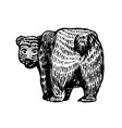 grizzly bear brown wild animal back view cute vector image