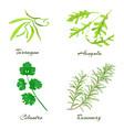 herbs tarragon arugula cilantro or coriander vector image
