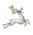 running deer drawn vintage sketch vector image vector image
