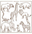 african animals and birds sketch vector image vector image