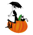 pumpkin old cat vector image vector image