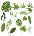 tropical leaves green jungle vector image vector image