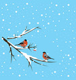 two bullfinches under the snowfall vector image vector image