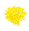 yellow dahlia isolated on white background vector image vector image