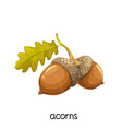 acorns with leaves vector image