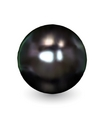 Black pearl isolated on white vector image